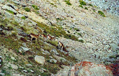 Фото охоты в Киргизии