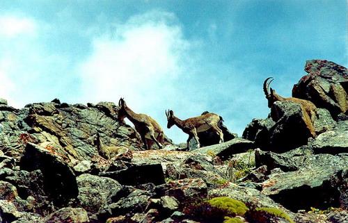 Животный мир Кыргызстана