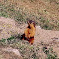 Pictures of Kyrgyzstan nature