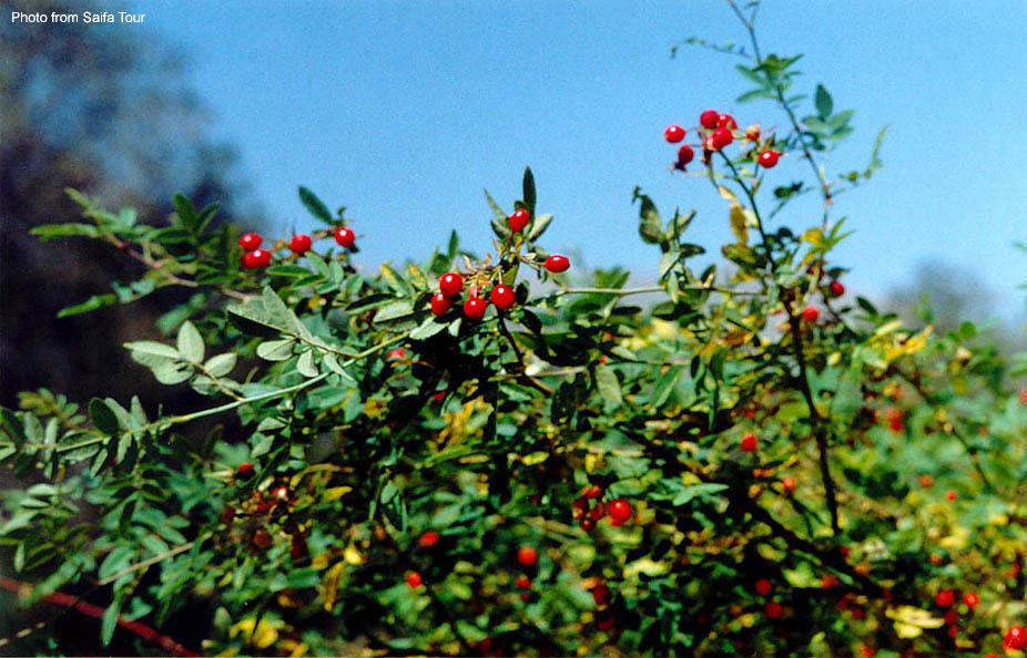 Растительность Кыргызстана